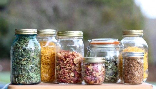 Probiotic Seasonings For Gut Health