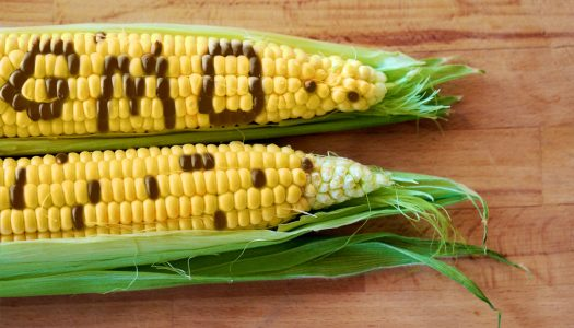 GMO Labeling Coming Soon